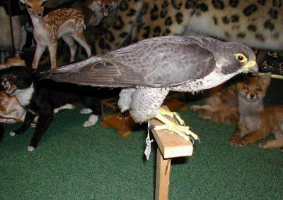 British Birds 004
