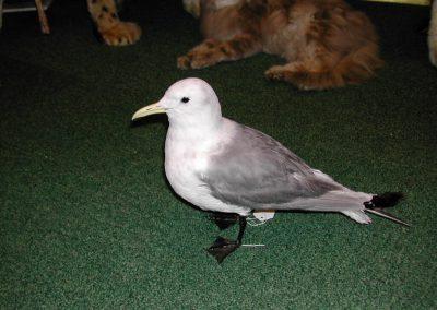 British Birds 006