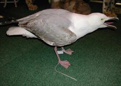 British Birds 011