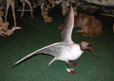 British Birds 012