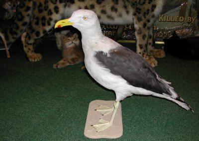 British Birds 013