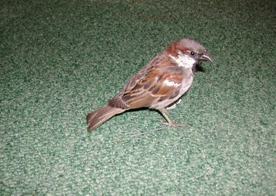British Birds 014