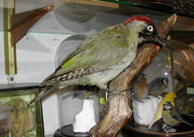 British Birds 017