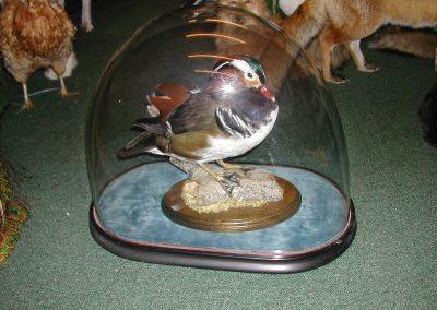 British Birds 021