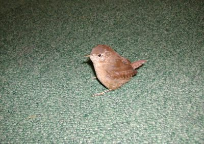 British Birds 022