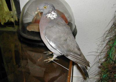 British Birds 023