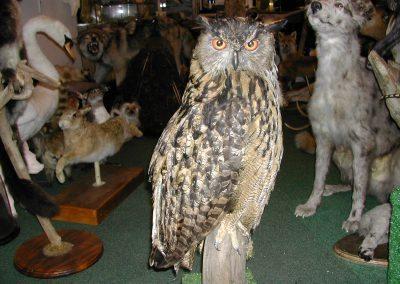 British Birds 028
