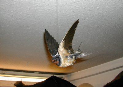 British Birds 031