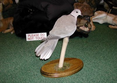 British Birds 040