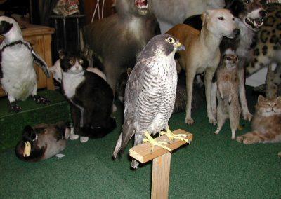 British Birds 044