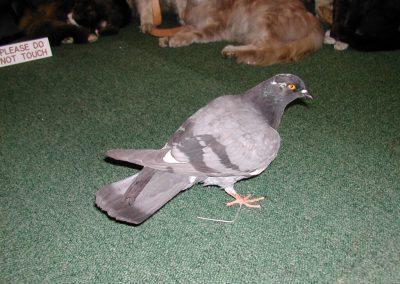 British Birds 046