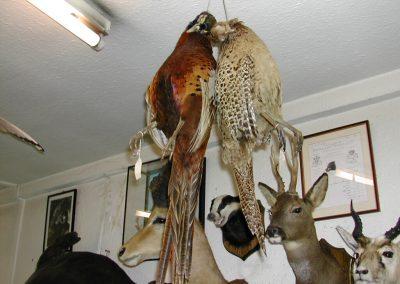 British Birds 048
