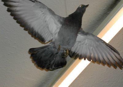 British Birds 050