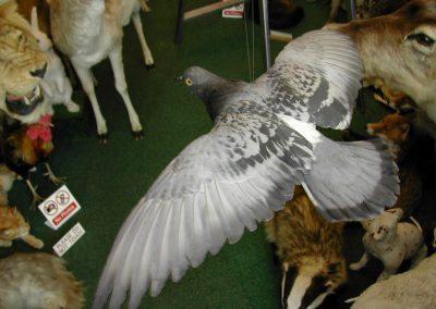British Birds 051