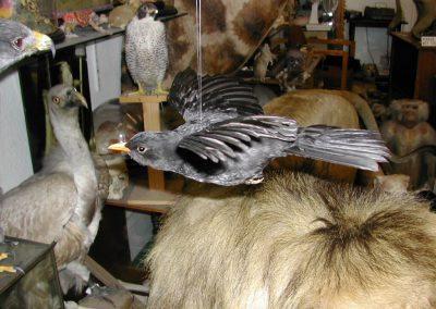 British Birds 052