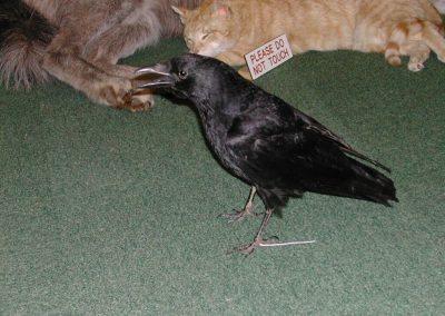 British Birds 056