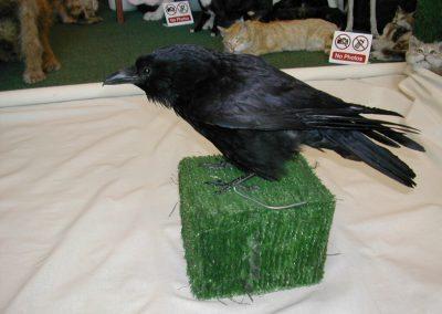 British Birds 059