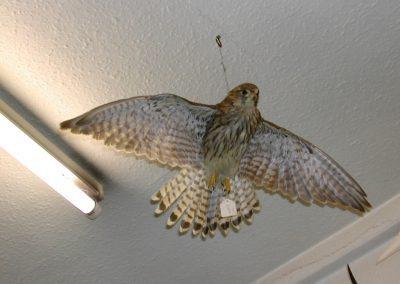 British Birds 061