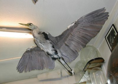 British Birds 062
