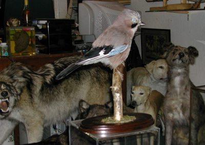 British Birds 071