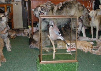 British Birds 073
