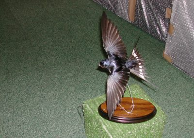 British Birds 077