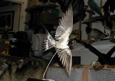 British Birds 078