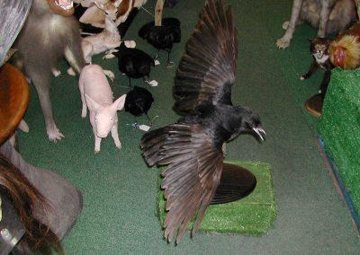 British Birds 081