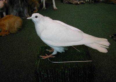 British Birds 085
