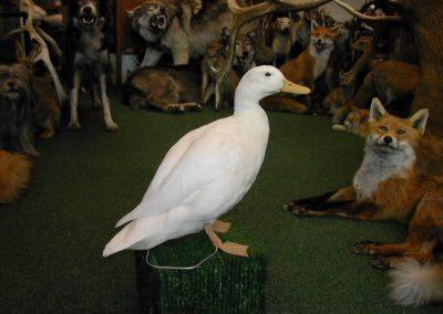 British Birds 086