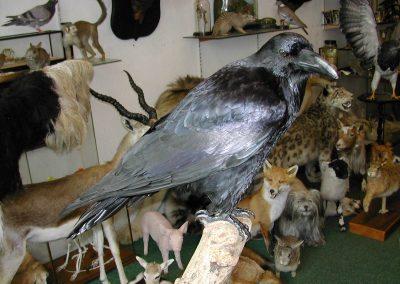 British Birds 089