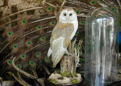 British Birds 091