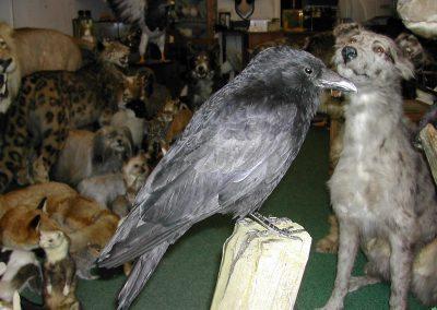 British Birds 098