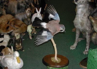 British Birds 100