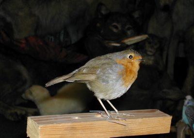 British Birds 113