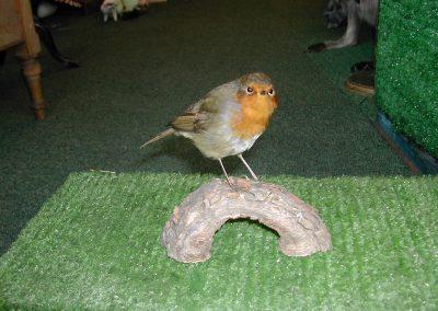 British Birds 114