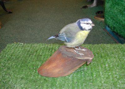 British Birds 115