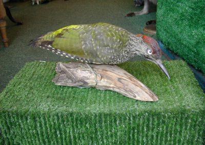 British Birds 117