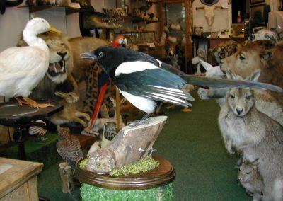 British Birds 120