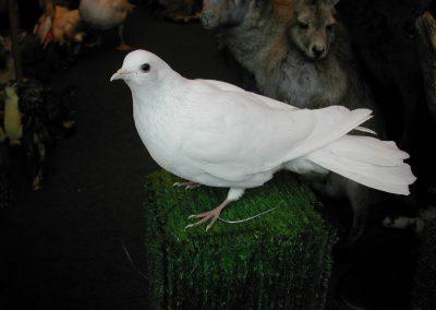 British Birds 122