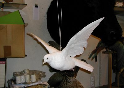 British Birds 123