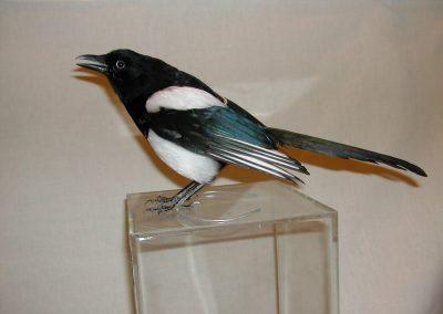 British Birds 126