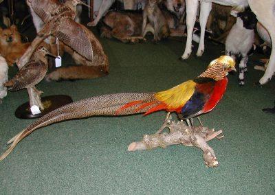 British Birds 131