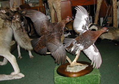 British Birds 138