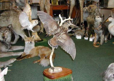 British Birds 140
