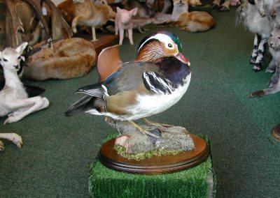 British Birds 141