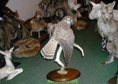 British Birds 143