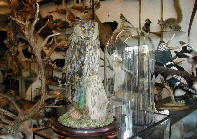 British Birds 146