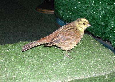 British Birds 149