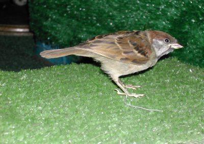 British Birds 150